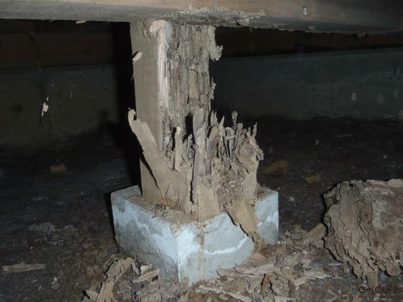 被害を受けていた木材